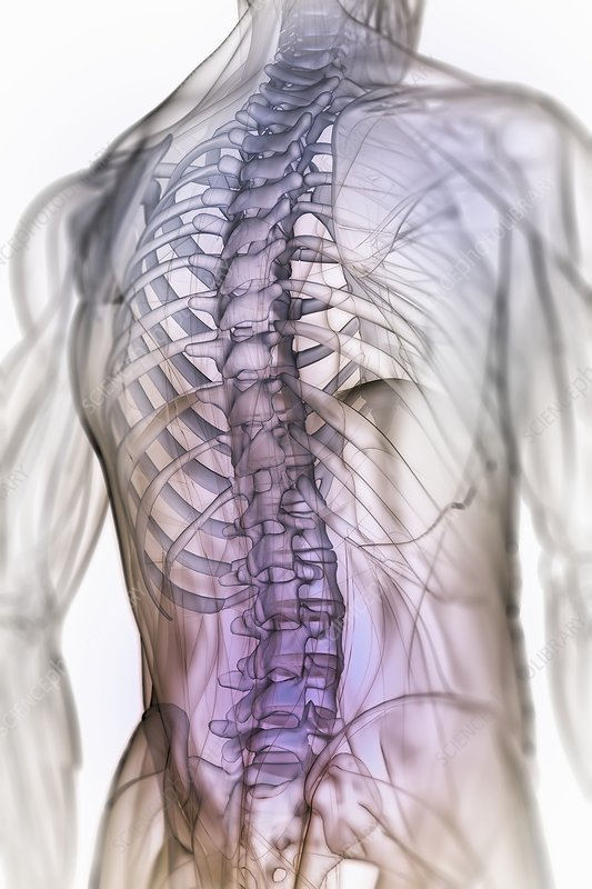 Anatomy of the Back and Spine, artwork