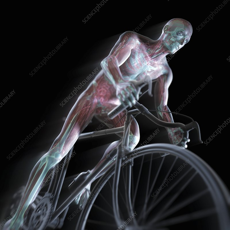 Cycling, artwork