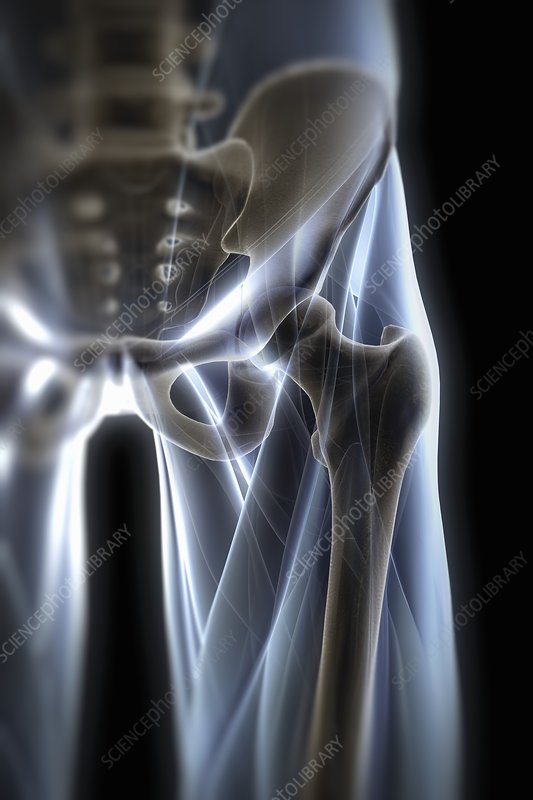 Hip Joint, artwork