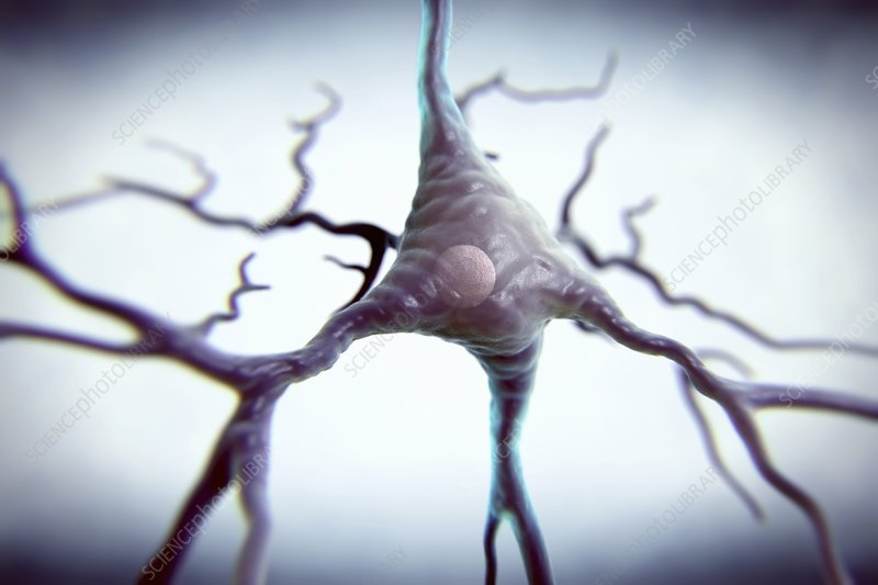 Pyramidal Neuron, artwork