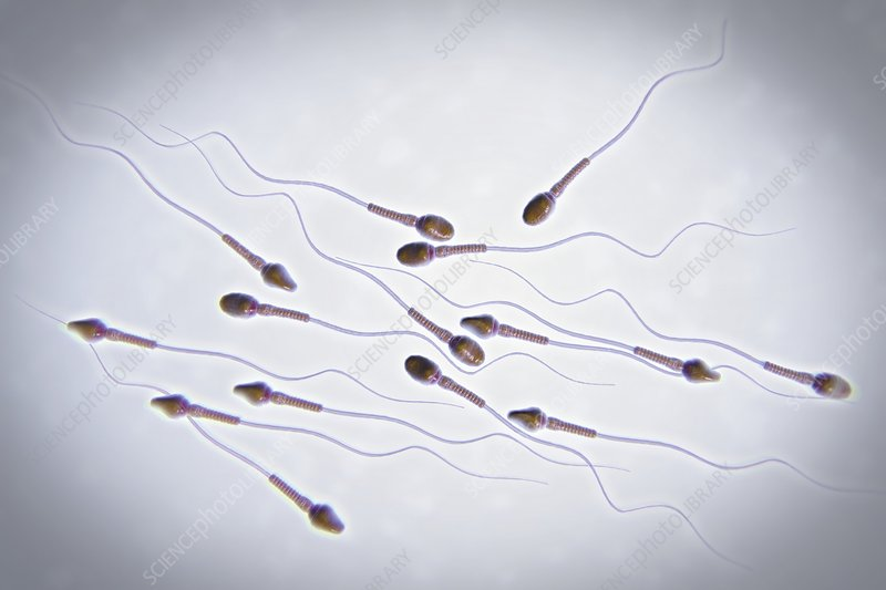 Human Sperm, artwork