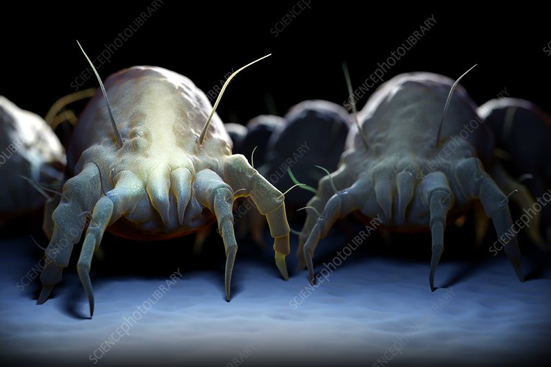 House Dust Mites, artwork