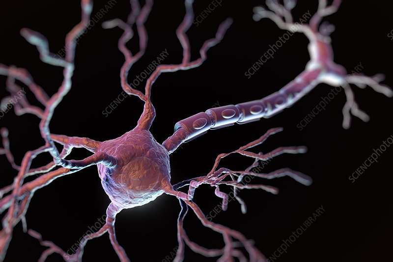 Multipolar Neuron, artwork