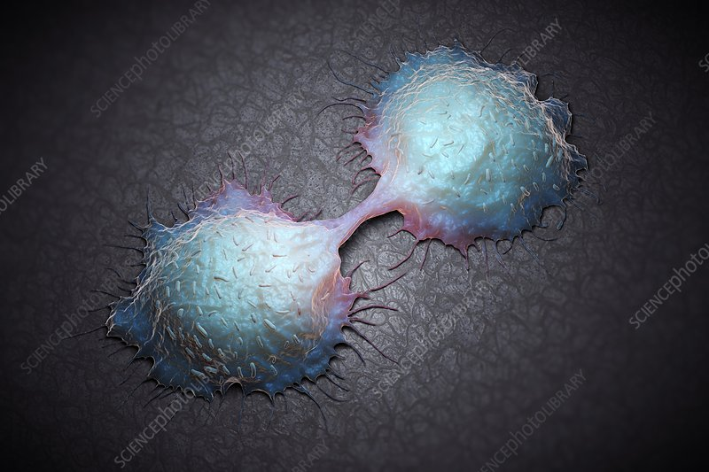 Colon Cancer Cells, artwork