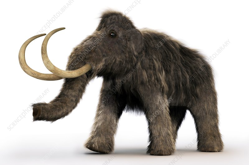 Wooly Mammoth, artwork