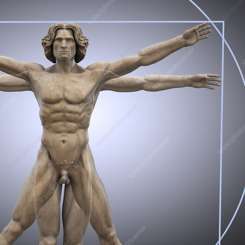 Vitruvian Man, artwork