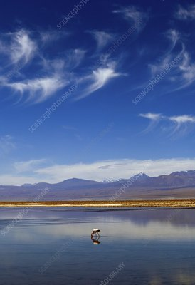 Lagoon and volcanoes, Atacama desert