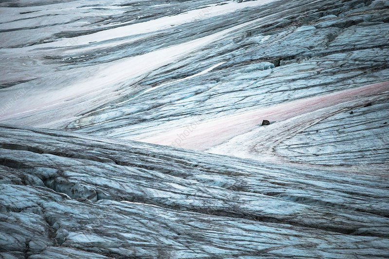 Glacial crevasses and pink algae blooms