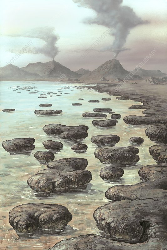 Stromatolites, artwork