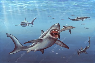 Megalodon prehistoric shark, artwork