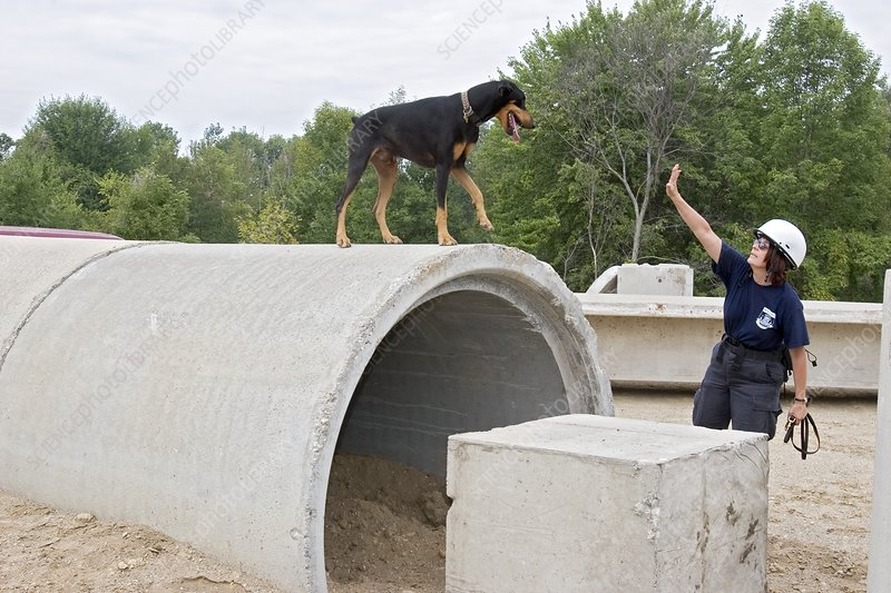 Training search and rescue dogs