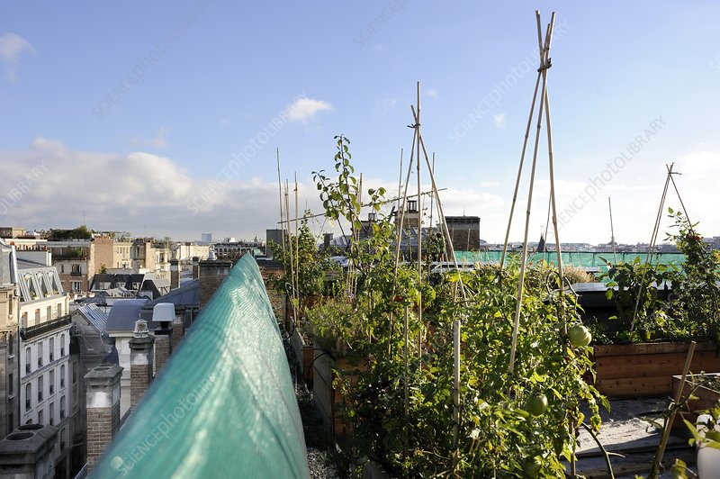 Experimental rooftop garden, Paris