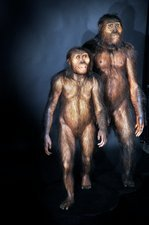 Australopithecines Lucy and Lucien