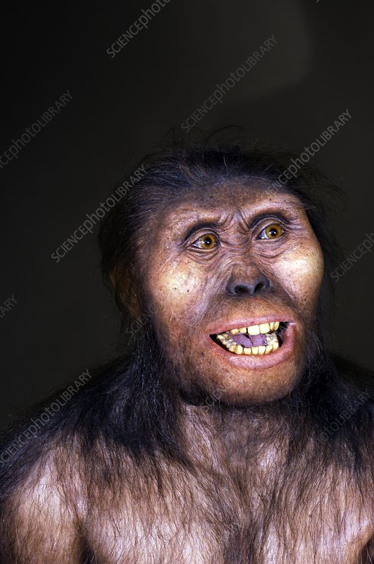 Australopithecine Lucy