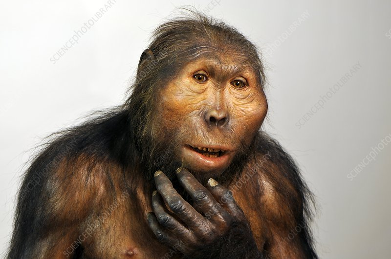 Paranthropus boisei model