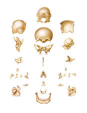 Bones of Head, artwork