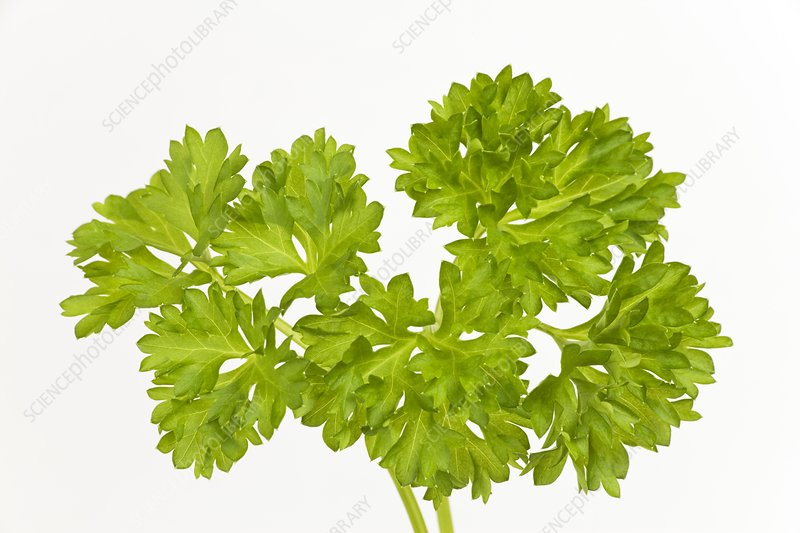 Parsley sprigs