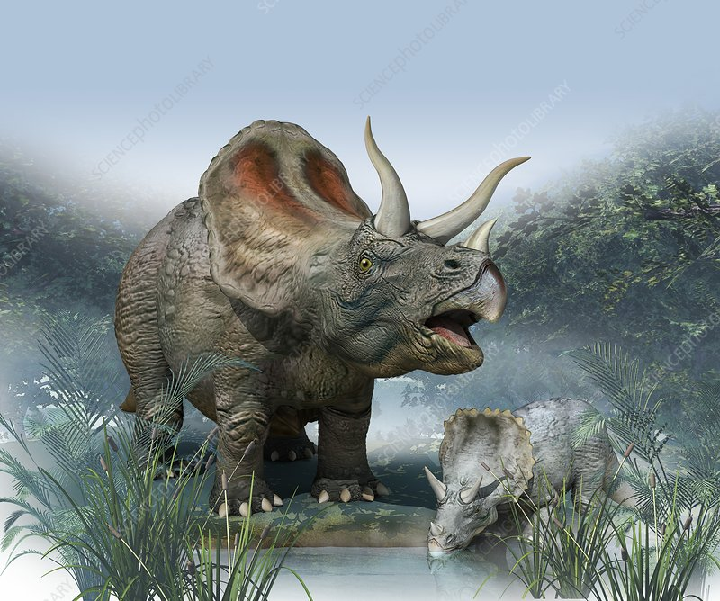 Triceratops old and young, artwork