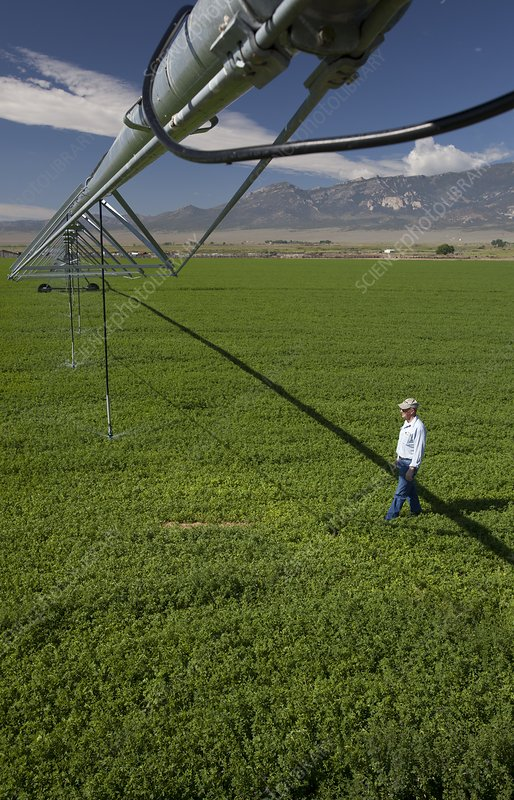 Irrigation boom and farmer with alfalfa
