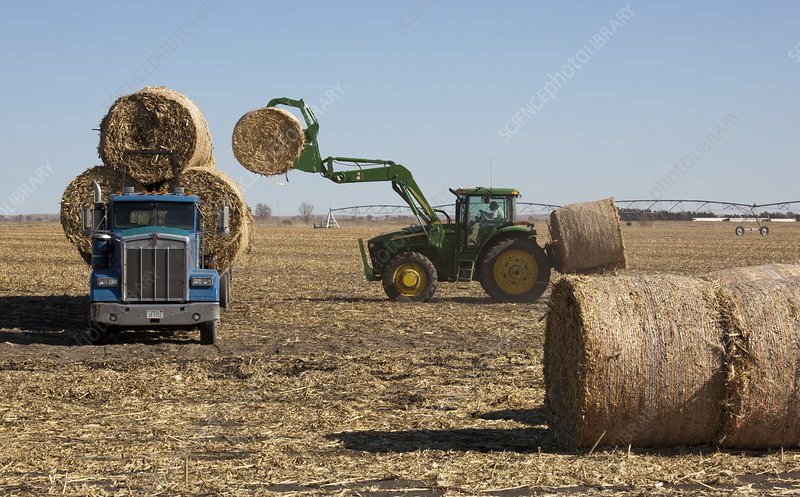 Loading bales of hay