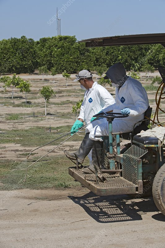 Farm workers applying pesticide