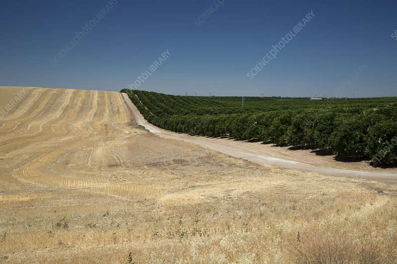 Irrigated orchard