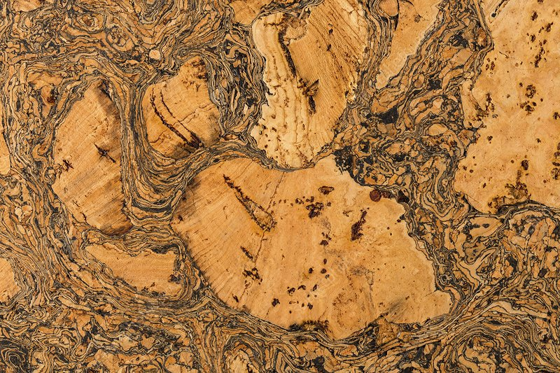 Cork Oak bark ( Quercus suber ) - section