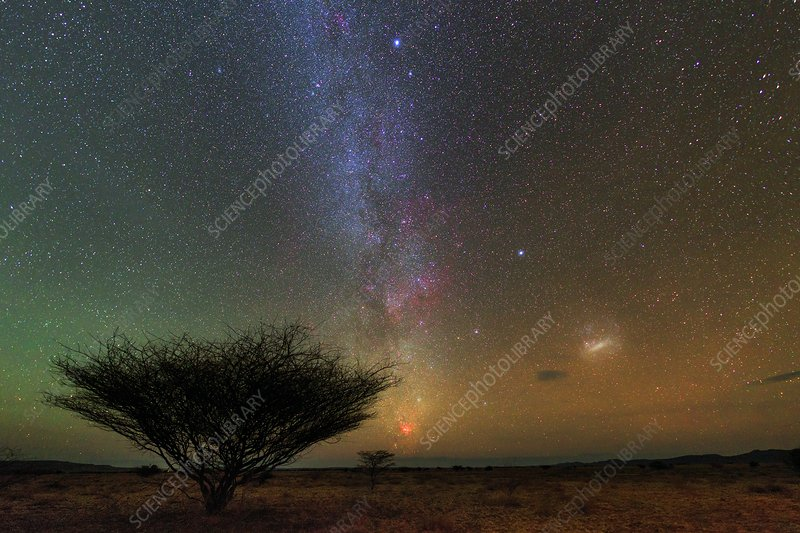 Night sky over a savanna