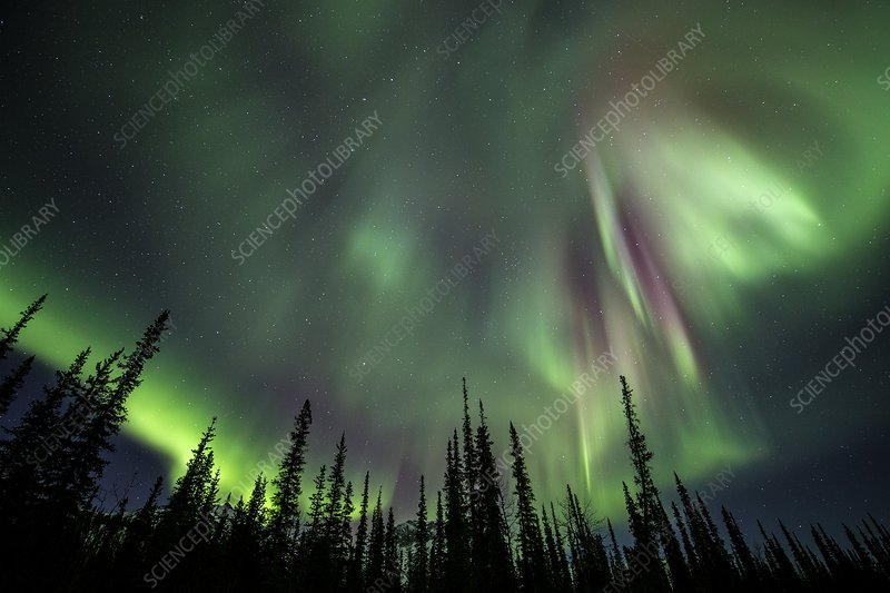 Aurora Borealis over trees