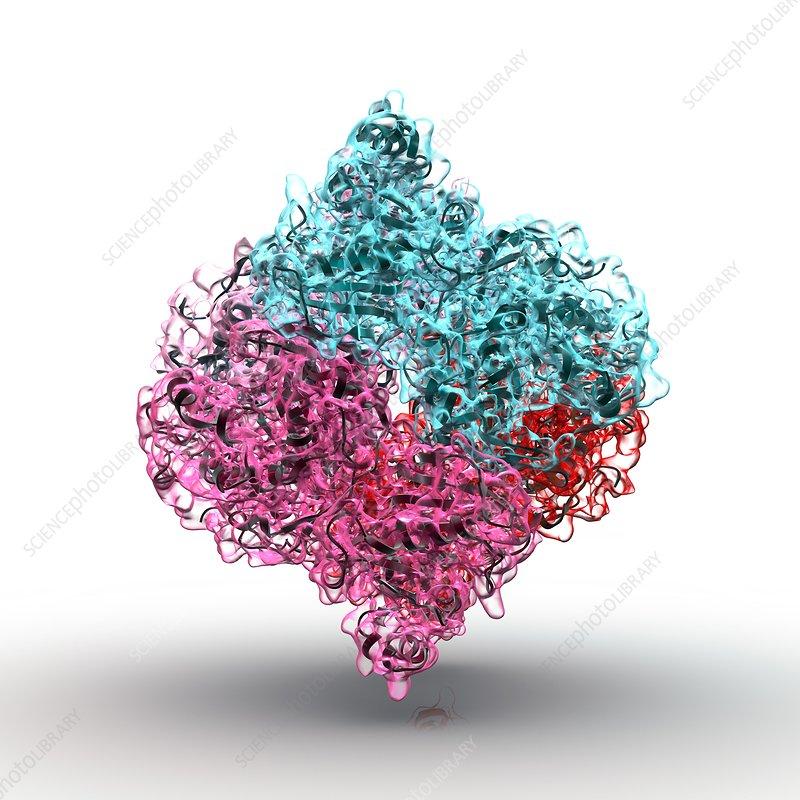 Insulin molecule, artwork
