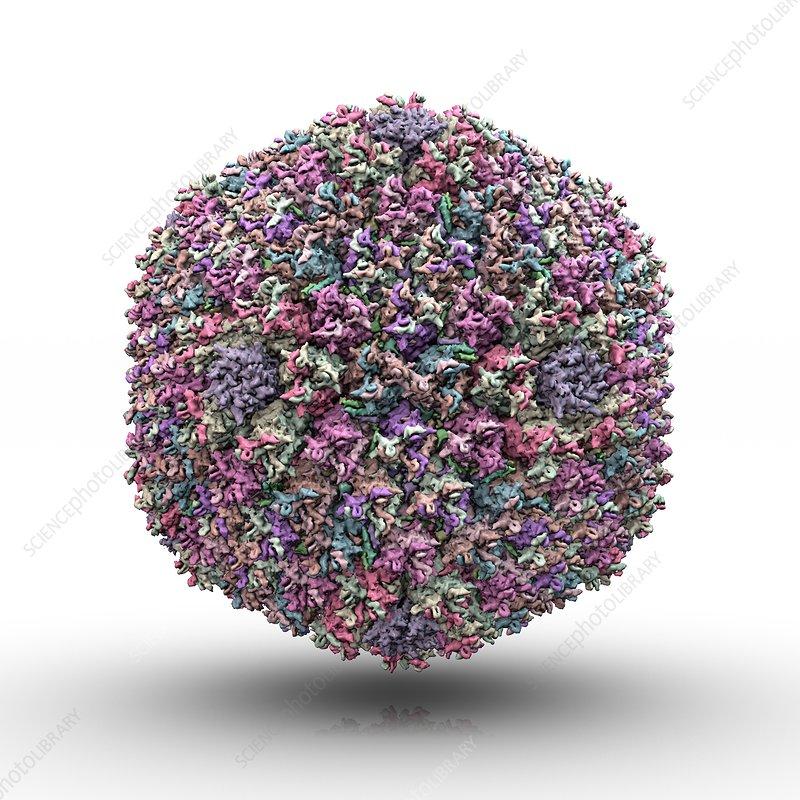 Adenovirus particle, artwork
