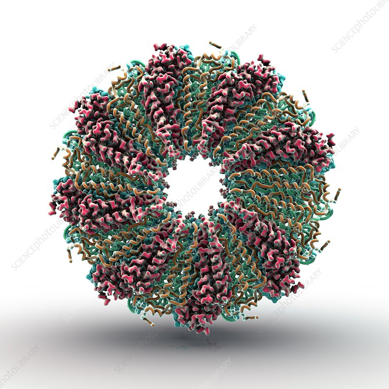 Tobacco mosaic virus proteins, artwork