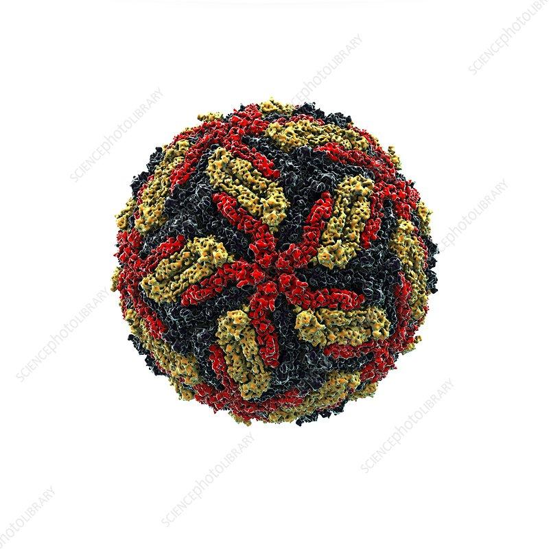 West Nile virus particle, artwork