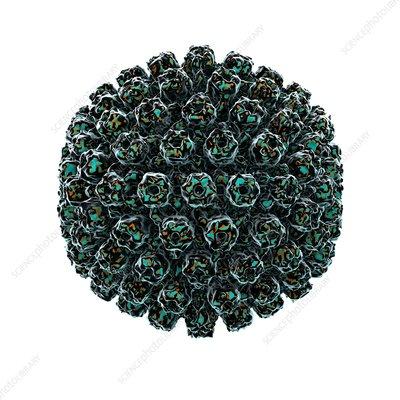 Herpes simplex type 1 virus, artwork