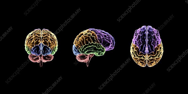 Brain, artwork