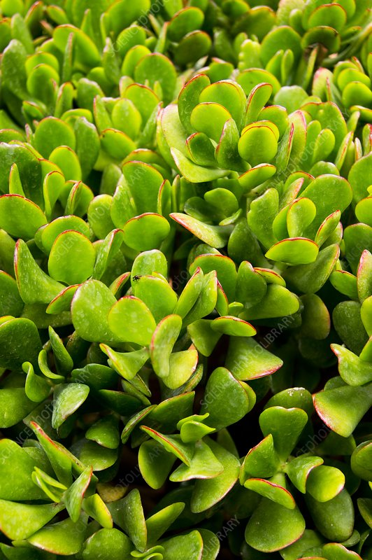 Succulent plant in Morocco