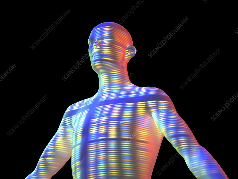 Genetic individuality, male body with DNA