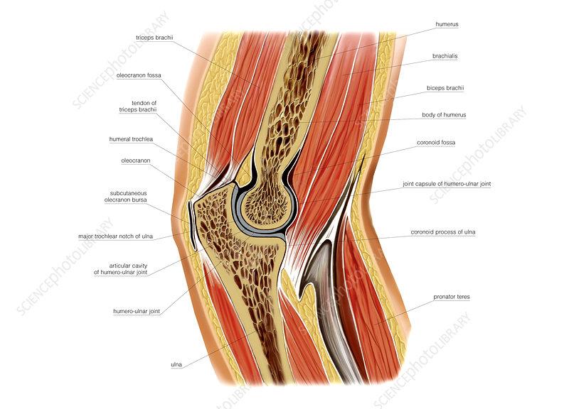 Elbow joint, artwork