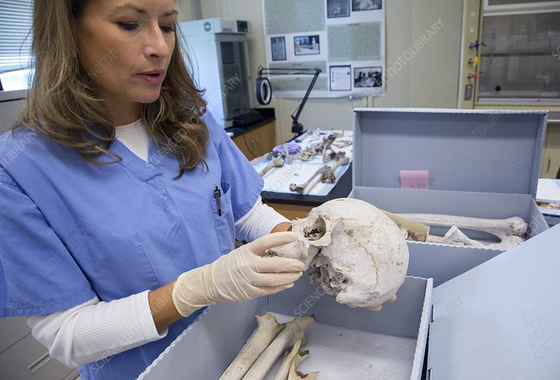 Forensic scientist identifying remains