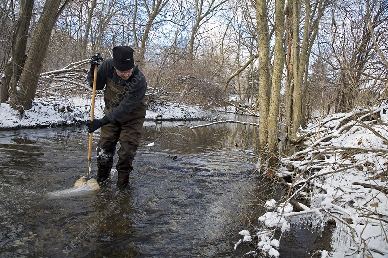 Volunteer searching for stoneflies
