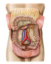 Small intestine lymphoid system, artwork
