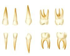 Child's teeth, artwork
