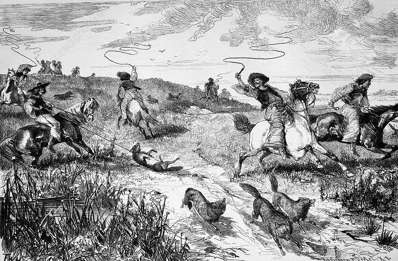 Hunting wolves, 19th century artwork