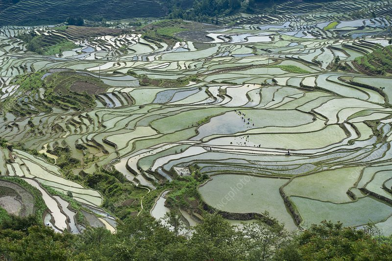 Duoyishu Hani Rice Terrace near Yuanyang, China