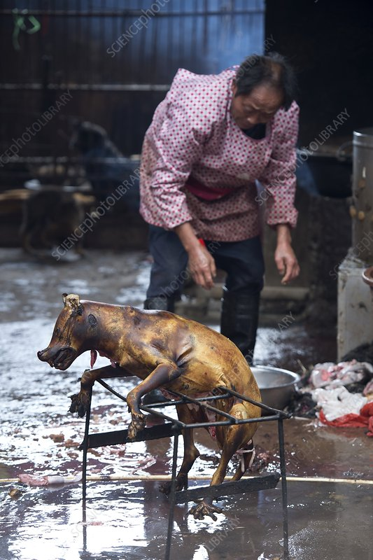 Barbecued dog carcass in a Chinese market