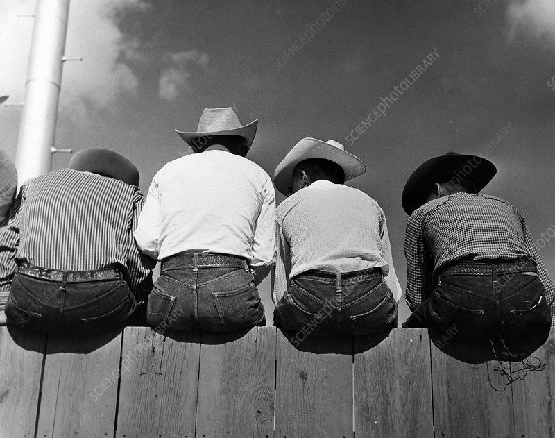 Rodeo spectators, 1954