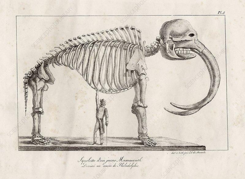 Mastodon skeleton, 19th-century artwork