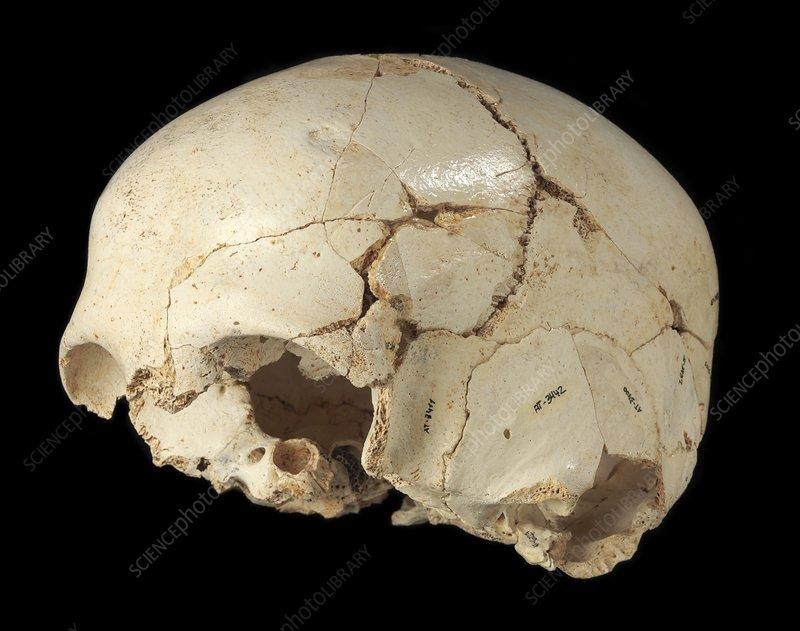 Hominin skull from Sima de los Huesos