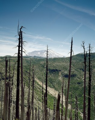 Mount St Helens volcano and dead trees