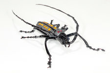 Longhorn beetle, glass sculpture